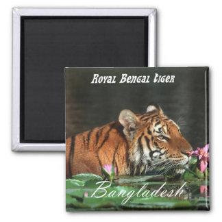 Royal Bengal Tiger 2 Inch Square Magnet