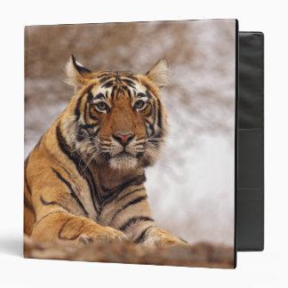 Royal Bengal Tiger - a close up, Ranthambhor 2 3 Ring Binder