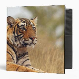 Royal Bengal Tiger - a close up, Ranthambhor Binder