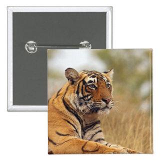 Royal Bengal Tiger - a close up, Ranthambhor Button