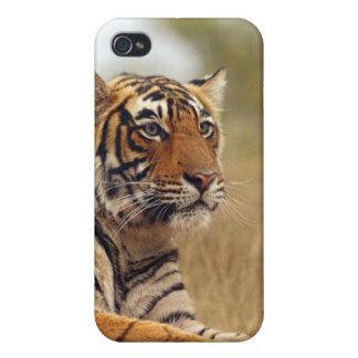 Royal Bengal Tiger - a close up, Ranthambhor Cover For iPhone 4