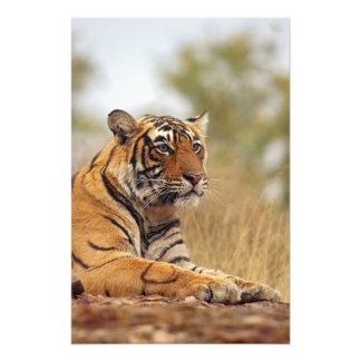 Royal Bengal Tiger - a close up, Ranthambhor Photo Print