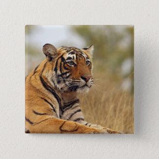 Royal Bengal Tiger - a close up, Ranthambhor Pinback Button