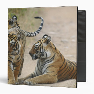 Royal Bengal Tiger and young ones, Ranthambhor Binders