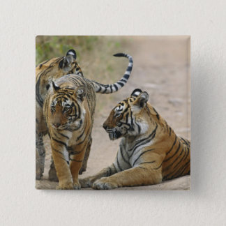Royal Bengal Tiger and young ones, Ranthambhor Button