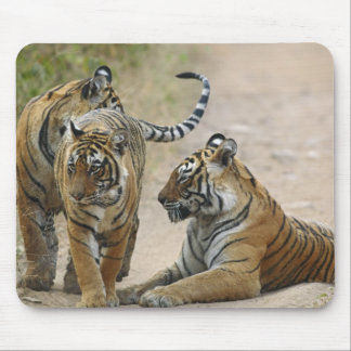 Royal Bengal Tiger and young ones, Ranthambhor Mouse Pad