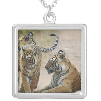 Royal Bengal Tiger and young ones, Ranthambhor Silver Plated Necklace