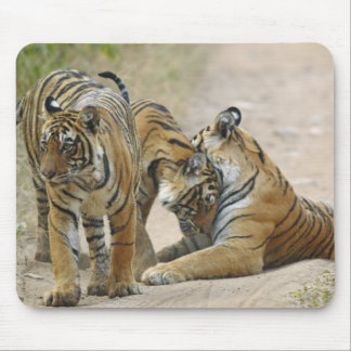 Royal Bengal Tiger and young ones - touching Mouse Pad