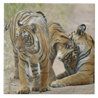 Royal Bengal Tiger and young ones - touching Tile