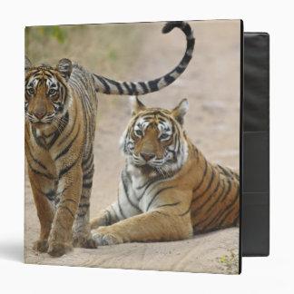 Royal Bengal Tiger and young, Ranthambhor Binder