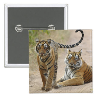 Royal Bengal Tiger and young, Ranthambhor Button