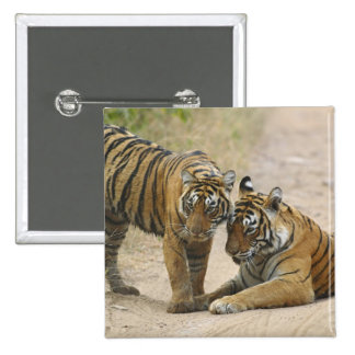 Royal Bengal Tiger and young - Touching ahead, Button