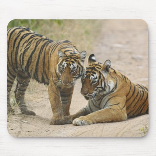 Royal Bengal Tiger and young - Touching ahead, Mouse Pad