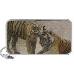 Royal Bengal Tiger and young - Touching ahead, Laptop Speakers
