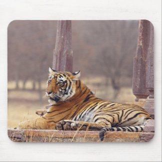 Royal Bengal Tiger at the ceaph, Mouse Pad