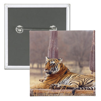 Royal Bengal Tiger at the ceaph, Pinback Button