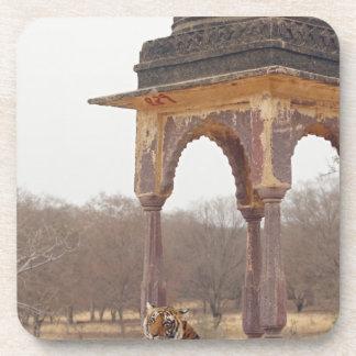 Royal Bengal Tiger at the cenotaph, Ranthambhor Beverage Coaster