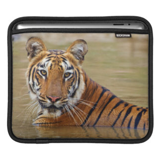 Royal Bengal Tiger at the waterhole Sleeve For iPads