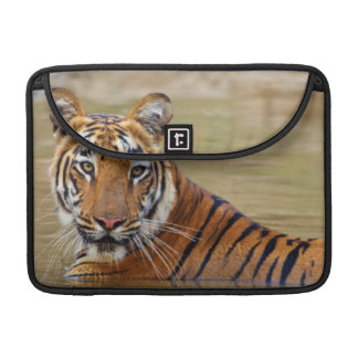 Royal Bengal Tiger at the waterhole Sleeve For MacBooks