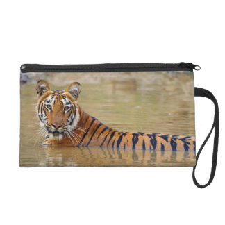 Royal Bengal Tiger at the waterhole Wristlet