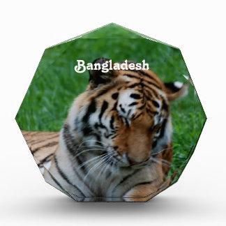 Royal Bengal Tiger Awards