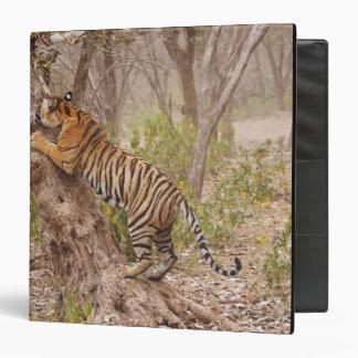 Royal Bengal Tiger climbing up the tree, Binder