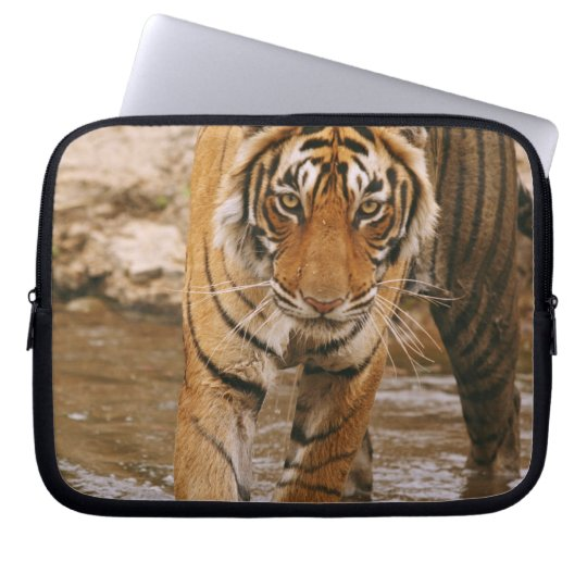 Royal Bengal Tiger coming out of jungle pond, Computer Sleeve