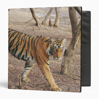 Royal Bengal Tiger coming out of woodland, Binder