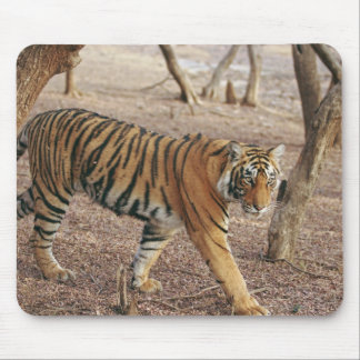 Royal Bengal Tiger coming out of woodland, Mouse Pad