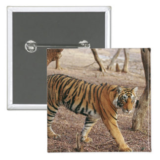 Royal Bengal Tiger coming out of woodland, Pinback Button