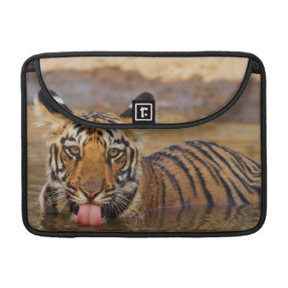 Royal Bengal Tiger cub, drinking water MacBook Pro Sleeve