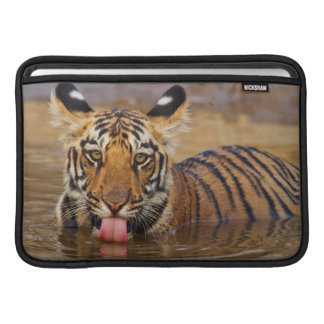 Royal Bengal Tiger cub, drinking water Sleeve For MacBook Air