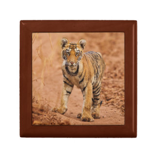 Royal Bengal Tiger cub on the move Jewelry Box