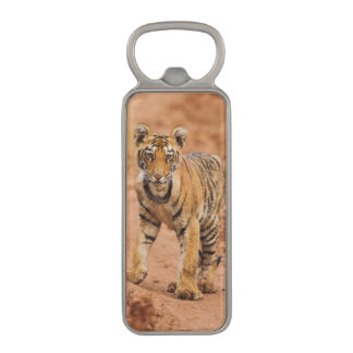 Royal Bengal Tiger cub on the move Magnetic Bottle Opener