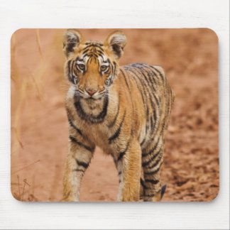 Royal Bengal Tiger cub on the move Mouse Pad