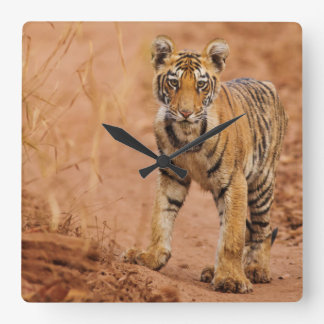Royal Bengal Tiger cub on the move Square Wall Clock
