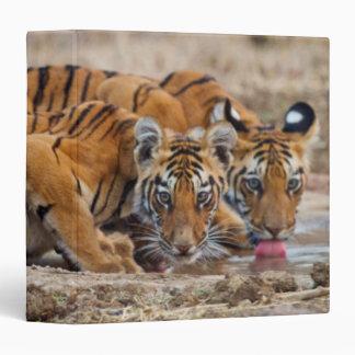 Royal Bengal Tiger cubs at the waterhole 3 Ring Binders