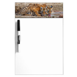Royal Bengal Tiger cubs at the waterhole Dry-Erase Board