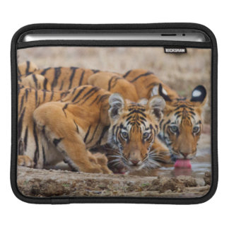 Royal Bengal Tiger cubs at the waterhole Sleeves For iPads
