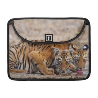 Royal Bengal Tiger cubs at the waterhole Sleeve For MacBooks
