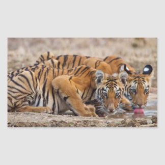 Royal Bengal Tiger cubs at the waterhole Rectangle Stickers