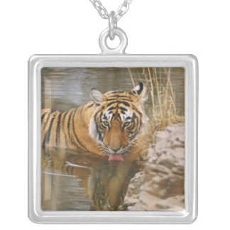 Royal Bengal Tiger drinking in the forest Square Pendant Necklace