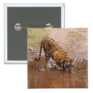Royal Bengal Tiger drinking water at the Pinback Button