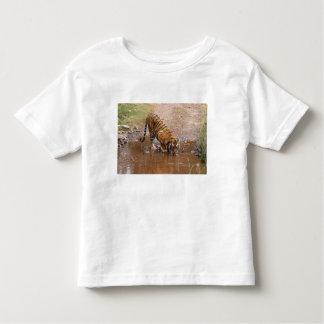 Royal Bengal Tiger drinking water at the Toddler T-shirt