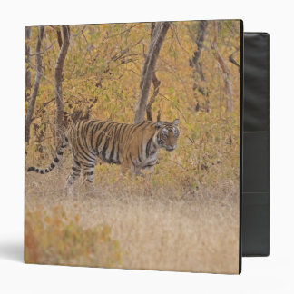 Royal Bengal Tiger in the forest, Ranthambhor 3 Ring Binder