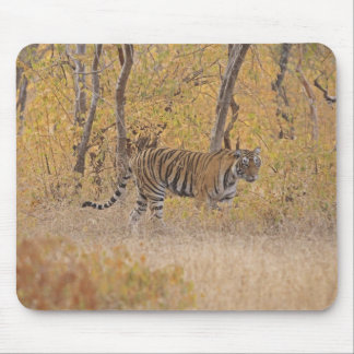 Royal Bengal Tiger in the forest, Ranthambhor Mouse Pad