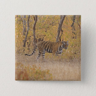 Royal Bengal Tiger in the forest, Ranthambhor Pinback Button