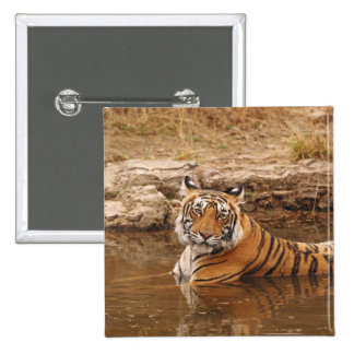 Royal Bengal Tiger in the jungle pond, 2 Pin