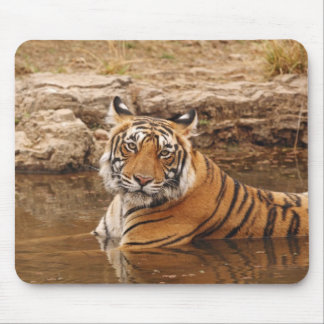 Royal Bengal Tiger in the jungle pond, 2 Mouse Pad