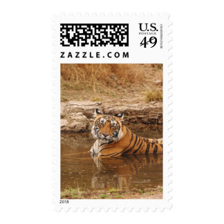 Royal Bengal Tiger in the jungle pond, 2 Stamps